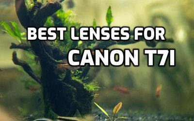 These 5 Best Lenses for Canon T7i are MUST HAVE in 2019