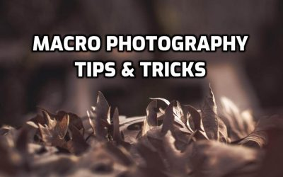Top 9 Tips For Macro Photography in 2020