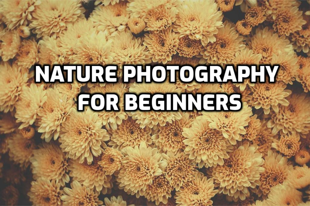 Nature Photography for Beginners