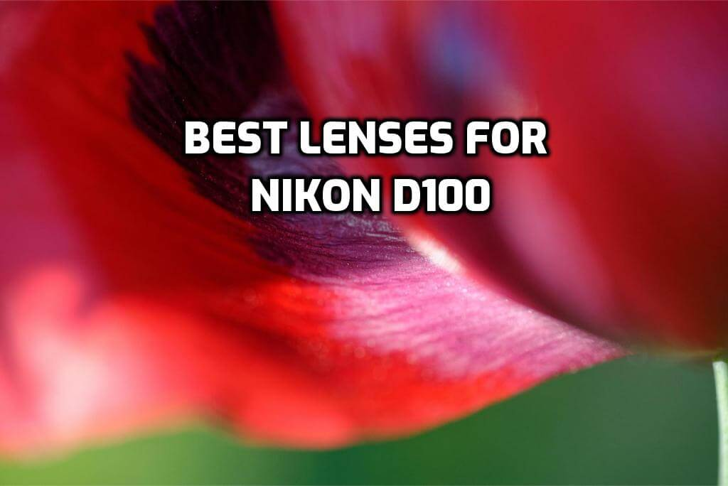 These are 5 Best Lenses for Nikon D100 in 2020 (Ultimate Guide)